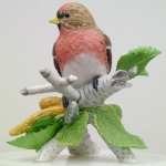 Common Redpoll (Garden Bird Collection)